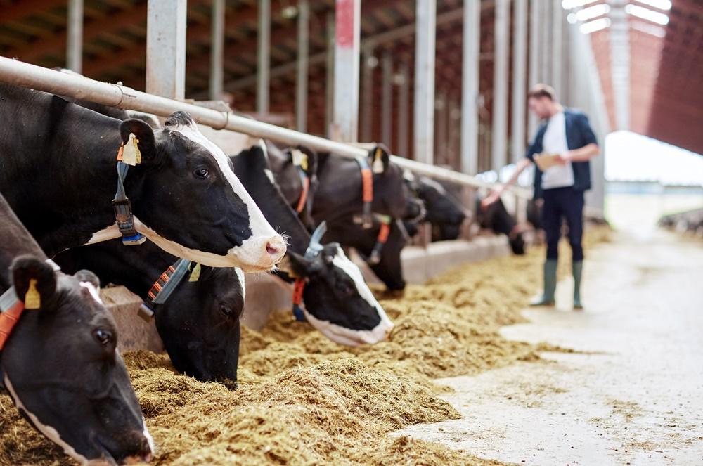 Cártel de la leche: comienza la cuenta atrás para presentar reclamaciones